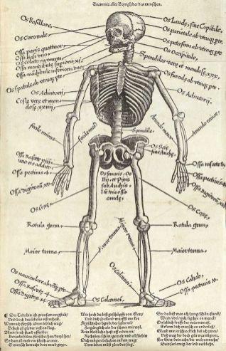 human-body-vintage-scientific-illustration-naturalist-drawing-0043