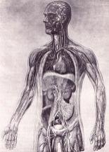 human-body-vintage-scientific-illustration-naturalist-drawing-0047