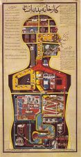 human-body-vintage-scientific-illustration-naturalist-drawing-0050