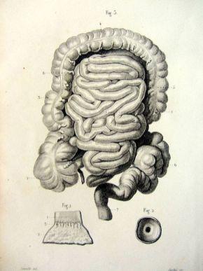 human-body-vintage-scientific-illustration-naturalist-drawing-0056