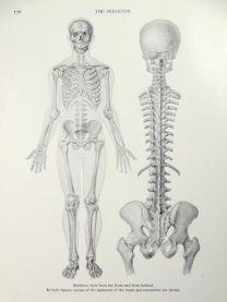 human-body-vintage-scientific-illustration-naturalist-drawing-0070
