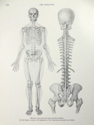 human-body-vintage-scientific-illustration-naturalist-drawing-0070