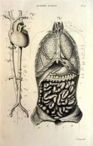 human-body-vintage-scientific-illustration-naturalist-drawing-0076