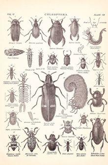 scientific-illustration-naturalist-drawing-0005