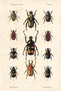 Biological illustration