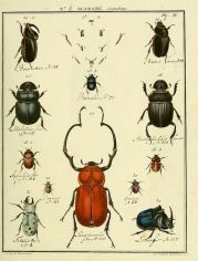 scientific-illustration-naturalist-drawing-0019