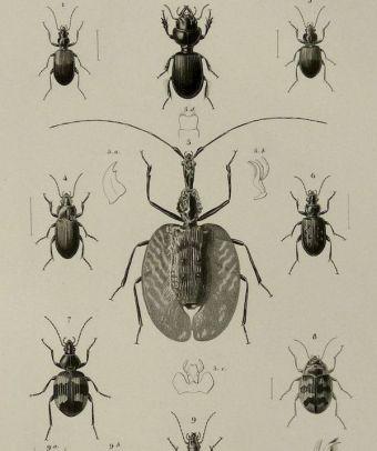 scientific-illustration-naturalist-drawing-0021