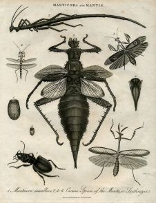 Old Scientific Illustrations