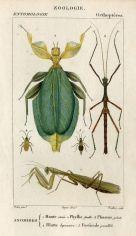 scientific-illustration-naturalist-drawing-0038