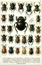 scientific-illustration-naturalist-drawing-0041