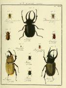 Insects Original Vintage Print