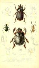 scientific-illustration-naturalist-drawing-0069