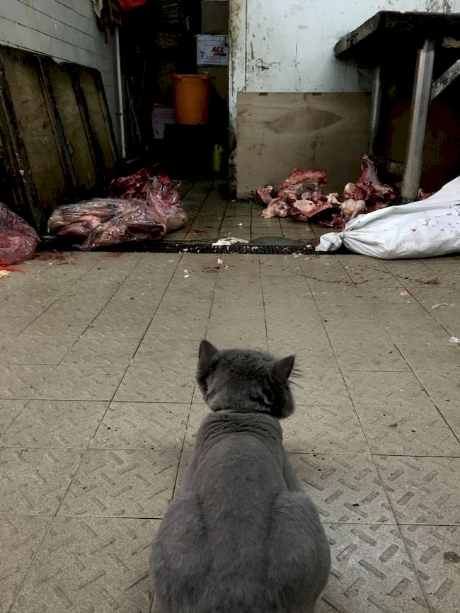 Cat Watch Meat in Hong Kong Street Photography