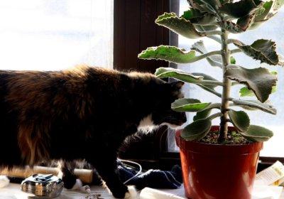 cica növénnyel