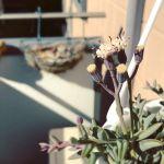 ドルフィンネックレスの花@Instagram