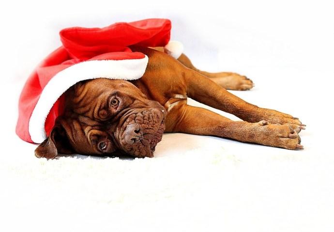 Jak na Nový rok, tak po celý rok. Přeci nebudete ležet doma!