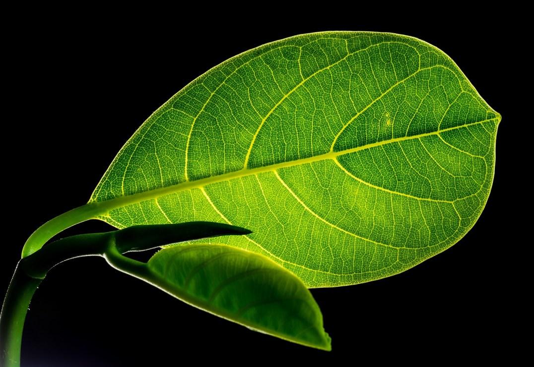 10 fois plus puissance que la photosynthèse, la feuille bionique pourrait produire le carburant du futur
