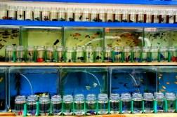 fishmarket, jakarta