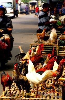 market-jakarta