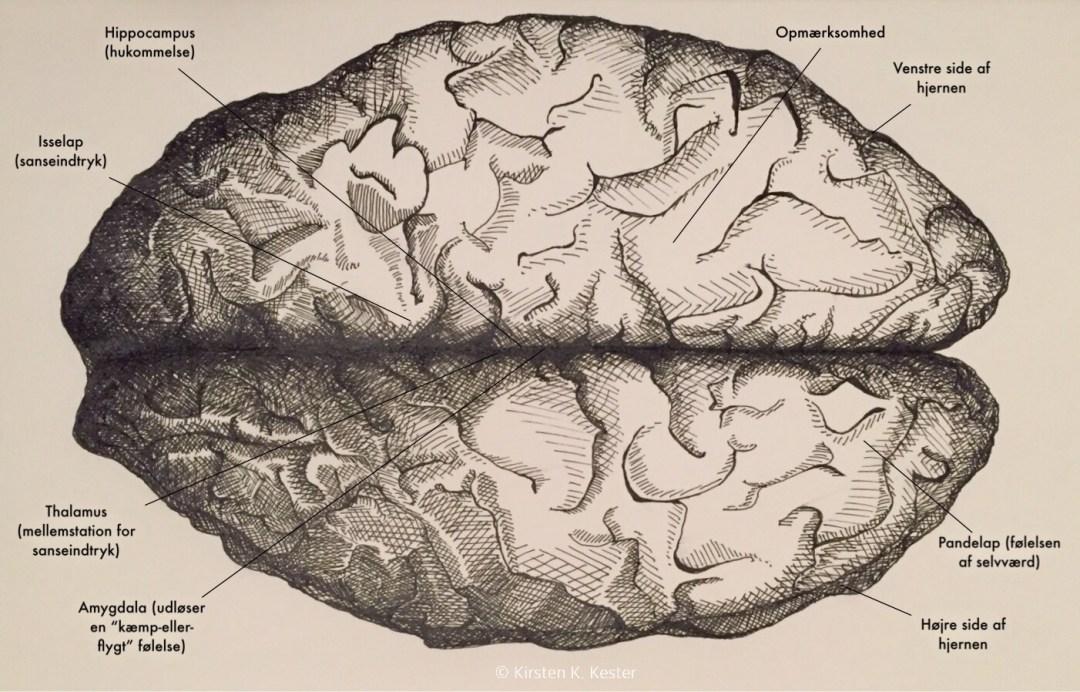 Brain with text © KesterArt.com   Kirsten K. Kester