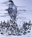20140921 juvenile herons (1)