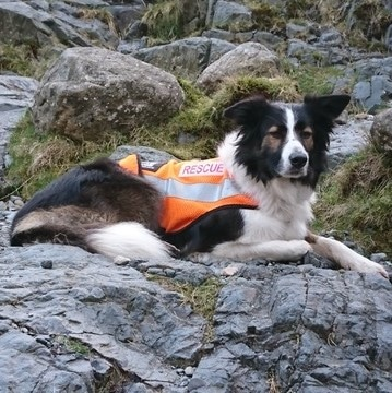 Isla Mountain search and rescue dog
