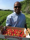 Ketan_deshpande_MN_strawberry_picking