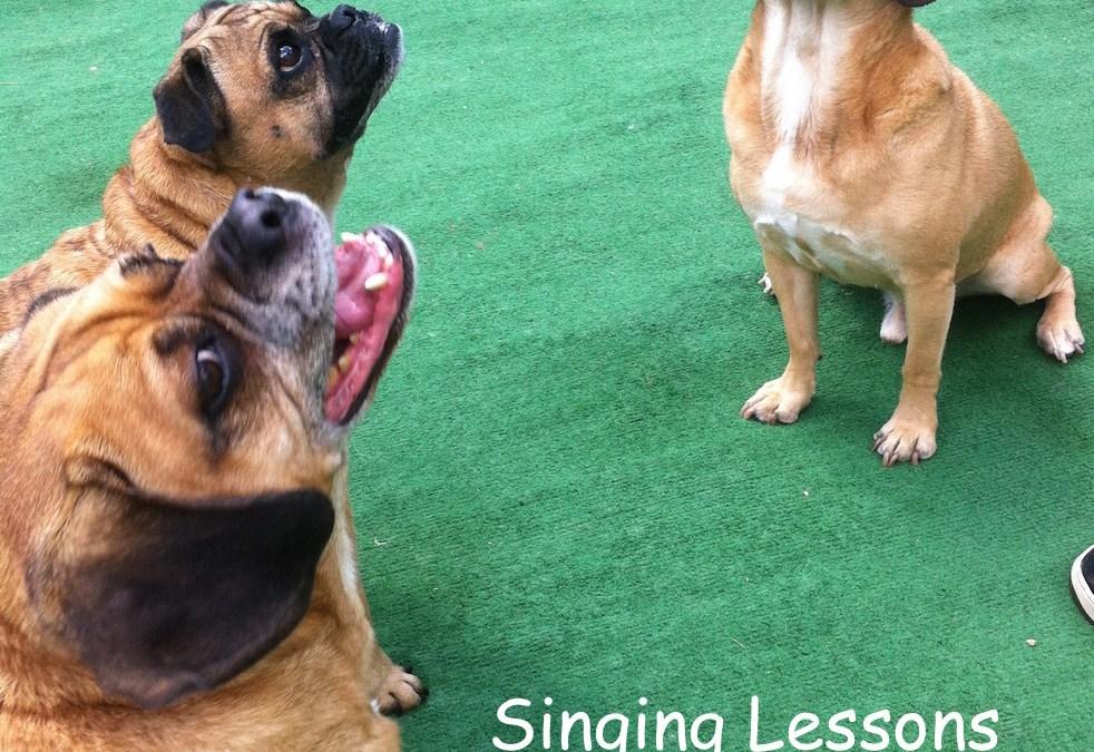 singing pugs