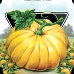 Pumpkin Seed package