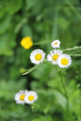 Summer Blooms © KETMALA'S KITCHEN 2012-13