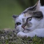 cat-2363809_640