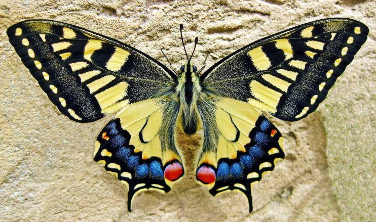 Schilddrüse - das Schmetterlingsorgan