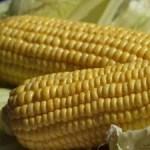 A kukorica gyermekei?