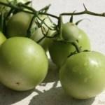 Zöldparadicsom