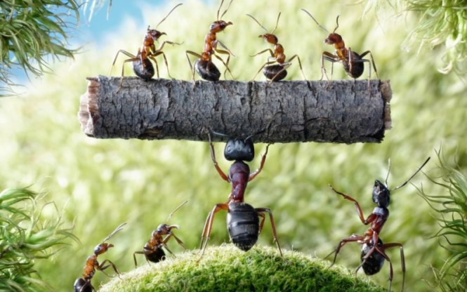 5 Lessons To Learn From Ants