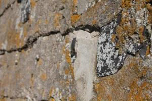 ancient-nail2