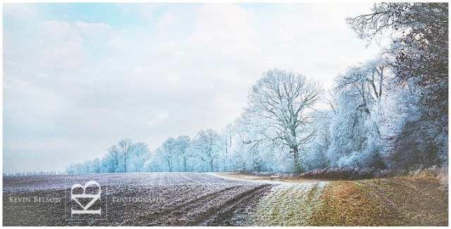 Savernake Wiltshire Winter Frost