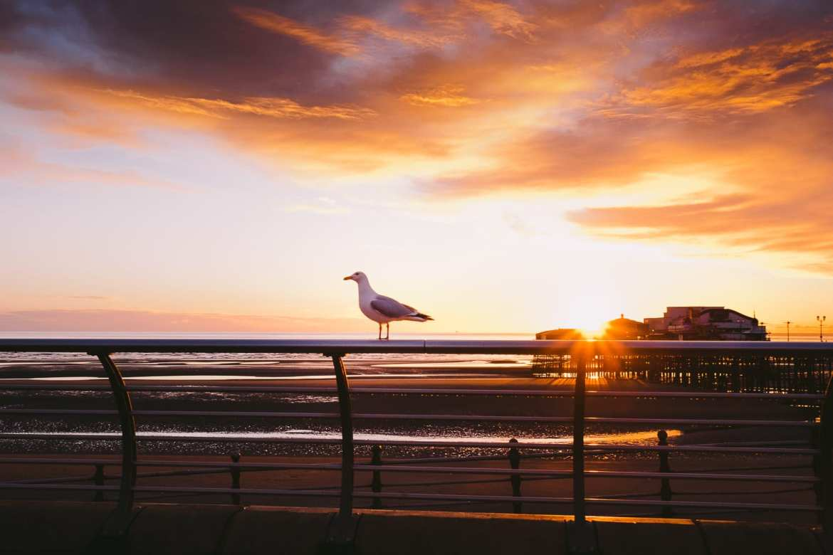 A seagull in front of a fiery sunset