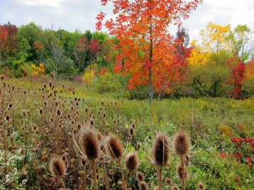Autumn Splendor: fall colours change the field and the forest.