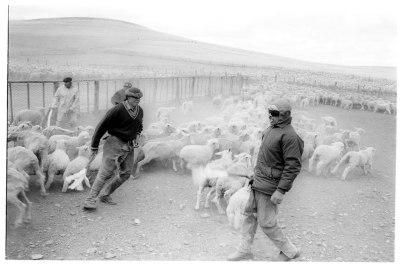 Shepherds Estancia Maria Behety