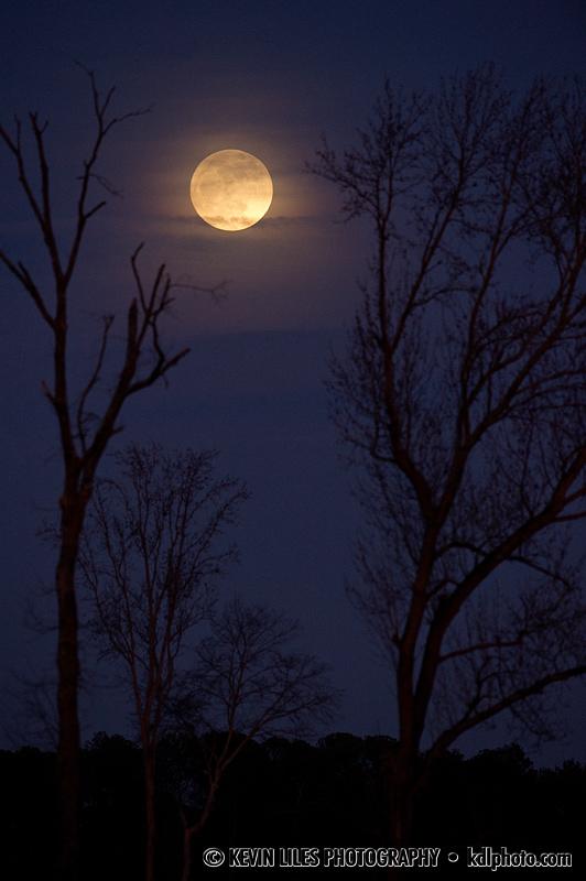 Moon and trees near Madison, GA.