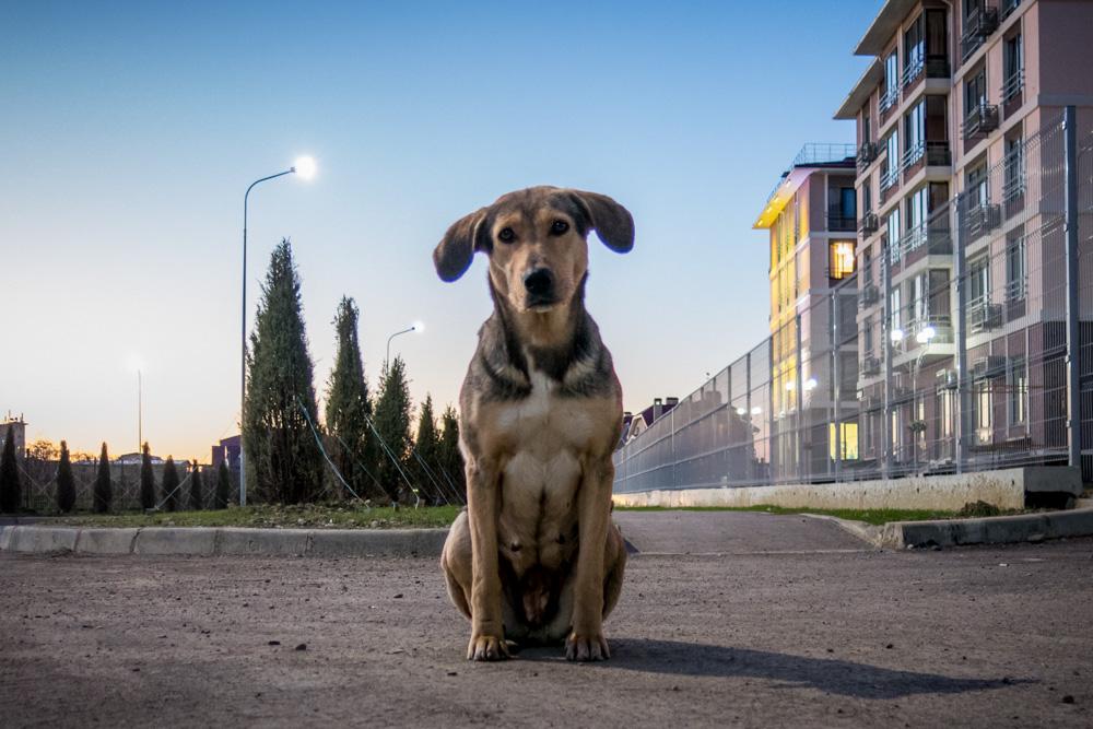 dogs of sochi