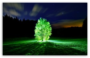 glowing_tree-t2