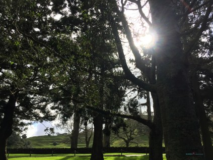 One Tree Hill also Cornwall Park provides the mixture of stories of native and colonial trees Auckland telling the history of Auckland...