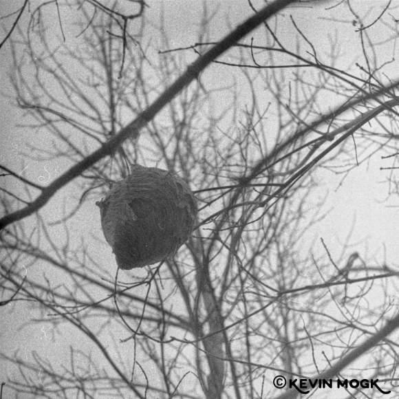 Wasp Nest The Forks Winnipeg Manitoba Image 03