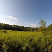 Hike 30: Cedar Ridge Preserve