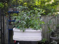 Balcony Gardening | Kevinthegarden's Blog