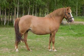 Eesti hobune Ruupia 4141E (2015)