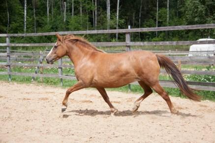 Eesti hobune Ruupia 4141E (2018)