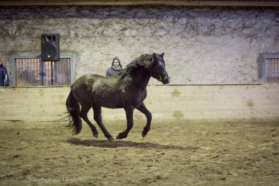 Eesti hobune Tarpan (2017) - Eesti Hobuste Aastanäitusel 2017